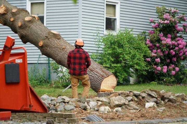 tree removal cost sacramento