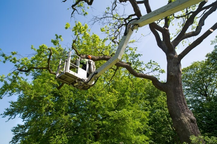 sacramento ca tree service