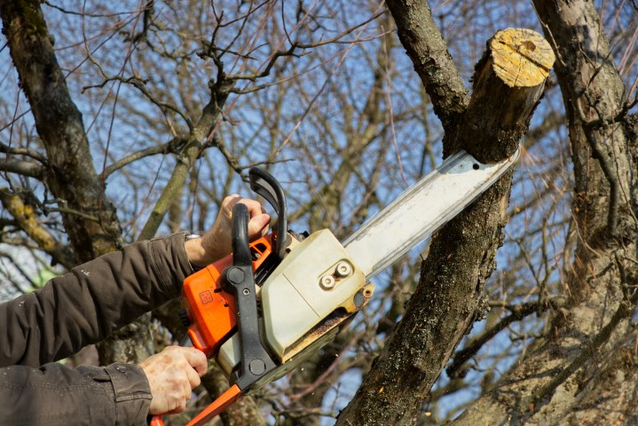 tree service sacramento ca