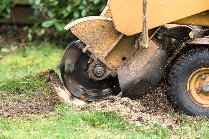 sacramento tree stump removal